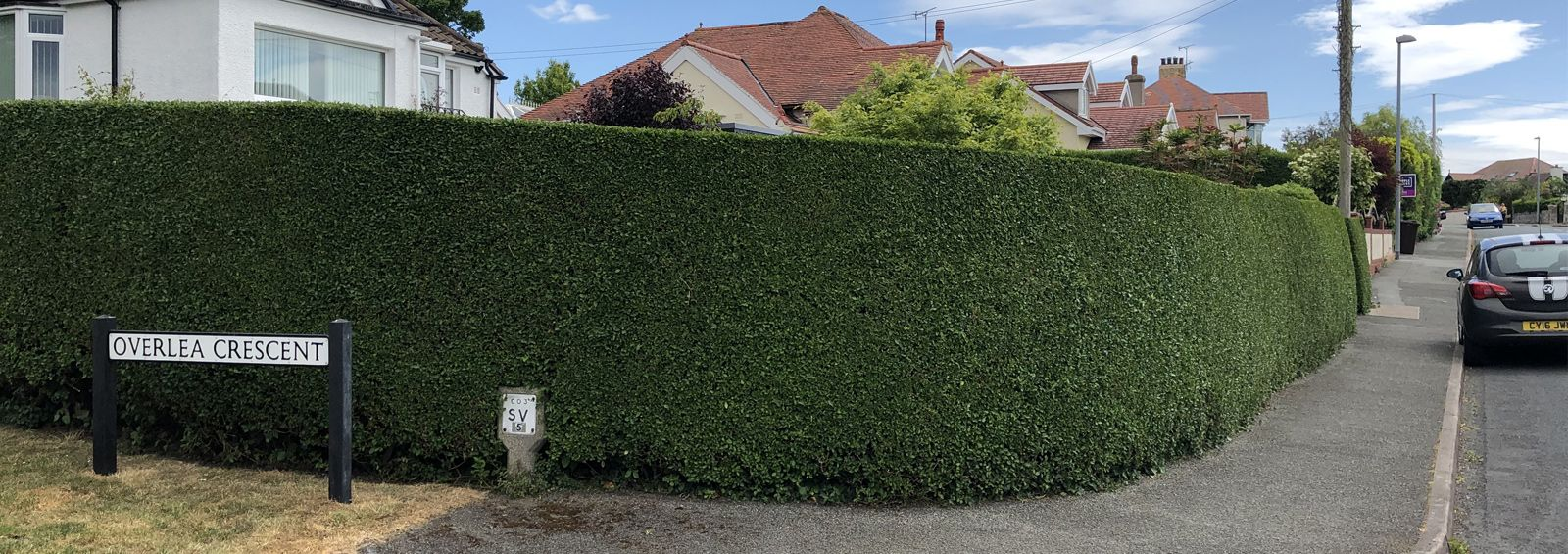 hedge maintenance conwy