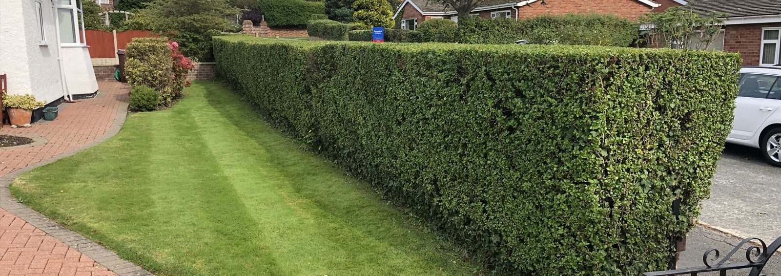 hedge maintenance conwy north wales